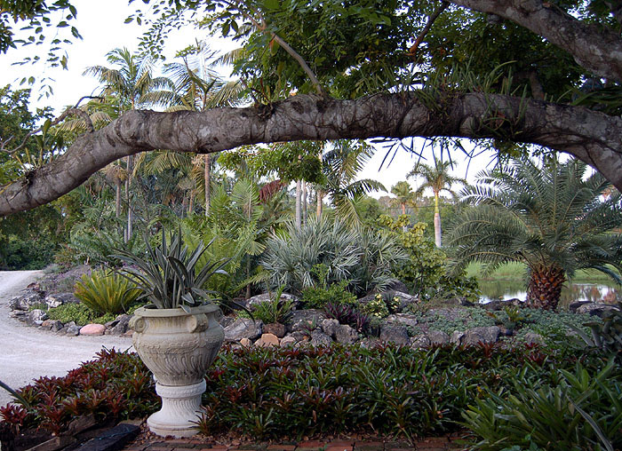 Drought tolerant palm and bromeliad landscape for Drought resistant landscaping