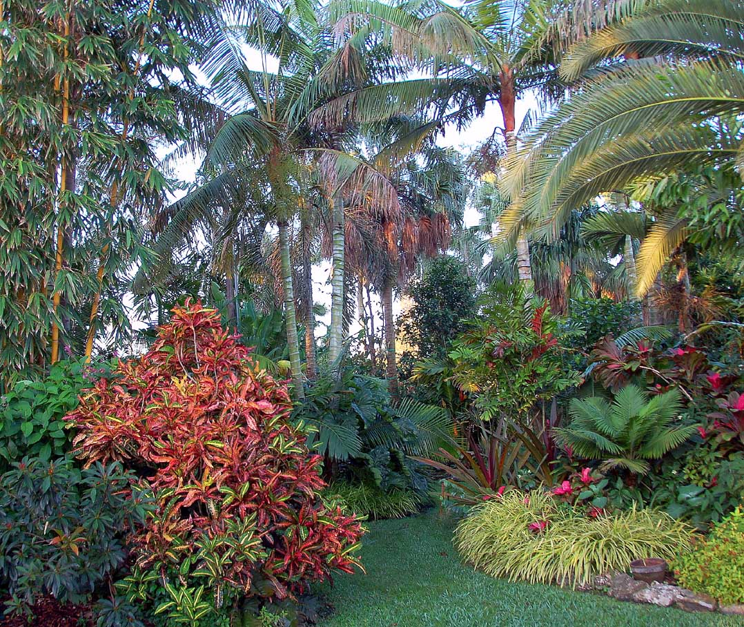 A tropical flower garden with roses landscaping for Tropical landscape